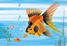 Achtergrond, vissen, aquarium Stock Fotografie