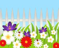 Achtergrond voor een ontwerp met een houten omheining en een mooie bloem Stock Foto