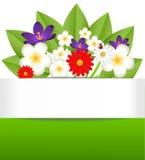 Achtergrond voor een ontwerp met mooie bloemen Stock Afbeelding