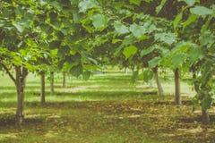 Achtergrond voor prentbriefkaaren in een rustieke stijl Het ontruimen in het bos en de takken van een Linde Stock Foto's