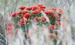 Achtergrond voor tekst met rode bloemen stock foto