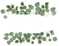 Achtergrond voor tekst van eucalyptus grijze en groene eucalyptus I royalty-vrije illustratie