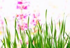 Achtergrond Weide in de lente Stock Afbeeldingen