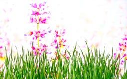 Achtergrond Weide in de lente Royalty-vrije Stock Foto's