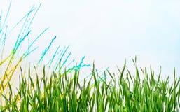 Achtergrond Weide in de lente Stock Afbeelding