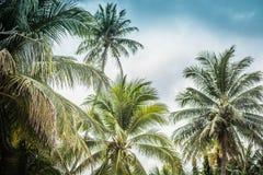 Achtergrondafbeelding van tropische palmen en blauwe hemel royalty-vrije stock fotografie