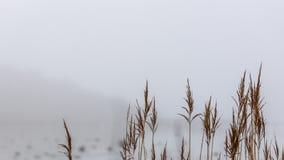 Achtergrondafbeeldingstro en mist stock foto's