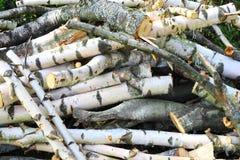 Achtergrondberkehout Royalty-vrije Stock Afbeelding