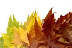 Achtergrondbladeren, de herfstkleuren Royalty-vrije Stock Afbeeldingen
