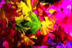 Achtergrondbladeren, de herfstkleuren Stock Afbeeldingen