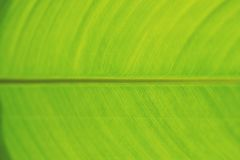 Achtergrondclose-up van vers groen banaanblad Stock Foto's
