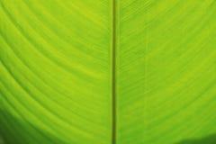 Achtergrondclose-up van vers groen banaanblad Stock Foto