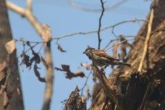 Achtergronden 020 de kleine vogelzitting in een boom Stock Fotografie