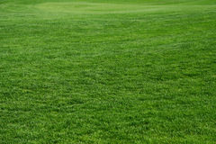 Achtergronden - gras Royalty-vrije Stock Afbeelding