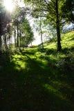 Achtergronden van bomen Stock Fotografie
