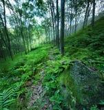 Achtergronden van de bosbomen de groene aard Stock Fotografie