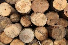 Achtergronden van de logboek de houten textuur Stock Foto's