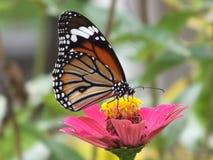 Achtergronden van de monarch de Mooie kleurrijke vlinder stock foto's