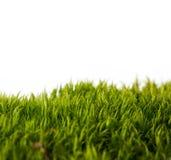 Achtergronden van vers de lente groen gras stock afbeeldingen