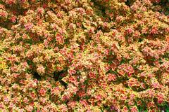 Achtergrondgroeps Geel roze blad royalty-vrije stock foto's