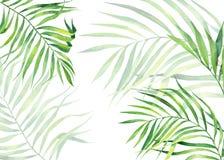 Achtergrondkader in waterverfstijl Exotische kokosnotenbladeren Natuurlijke druk Heldergroen tropisch kader voor groetkaarten, We stock illustratie