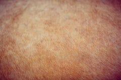 Achtergrondkleur van bont van wilde dierenschot Royalty-vrije Stock Fotografie