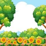 Achtergrondscène met zonnebloemen in tuin Stock Afbeeldingen