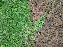 Achtergrondsteen en gras Royalty-vrije Stock Fotografie