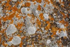 Achtergrondtexturen Het close-up van de steentextuur met kleurrijke vlekken Royalty-vrije Stock Afbeeldingen
