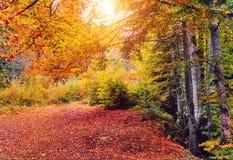 Achtergrondtextuur van de gele bladerenherfst Stock Foto