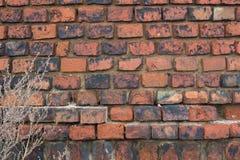 Achtergrondtextuur van een oude geruïneerde bakstenen muur Stock Afbeelding