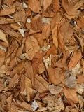 Achtergrondtextuur van Gevallen Bladeren Stock Fotografie
