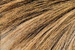 Achtergrondtextuur van hout Royalty-vrije Stock Foto's
