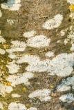 Achtergrondtextuurboom stock afbeeldingen