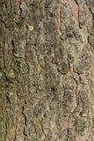 Achtergrondtextuurboom stock afbeelding