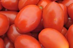Achtergrondtomaten San Marzano Royalty-vrije Stock Afbeeldingen