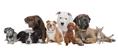 Achtergruppe Hunde Lizenzfreies Stockfoto