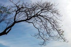 Achterlicht van silhouet het droge takken met hemelwolken Royalty-vrije Stock Fotografie