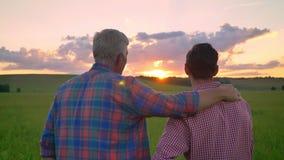 Achtermening die van vader volwassen zoon omhelzen en op mooie zonsondergang letten, die zich op tarwe of roggegebied bevinden stock videobeelden