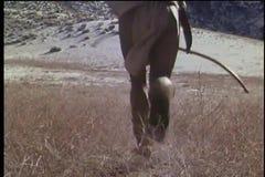 Achtermening van een Inheemse Amerikaanse mens die met boog en pijl op gebied lopen stock videobeelden