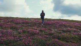 Achtermening van een jonge aantrekkelijke vrouw die met rugzak op de gebloeide bergheuvel beklimmen Heuvel met roze wordt behande stock videobeelden