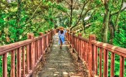 achtermening van het vrouwelijke toerist lopen op weg in het bos royalty-vrije stock foto's