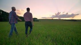 Achtermening van oude papa die samen met volwassen zoon op tarwe of roggegebied, mooie aard tijdens zonsondergang op achtergrond  stock footage