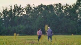Achtermening van oude vader en volwassen zoon die vooruit op tarwegebied lopen, donkergroen bos op achtergrond, oogstseizoen stock videobeelden