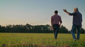 Achtermening van volwassen zoon en oude vader die op stro of roggegebied, het landbouwbedrijf die van de oogstlandbouw, twee mens stock videobeelden