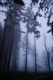 Achtervolgd bos Stock Afbeelding