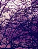 Achtervolgde bomen stock afbeeldingen