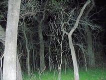 Achtervolgde bomen royalty-vrije stock afbeeldingen