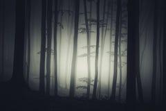 Achtervolgde bosachtergrond bij nacht stock foto's