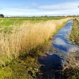 Achterwasser in Usedom in der Ostsee Stockbild